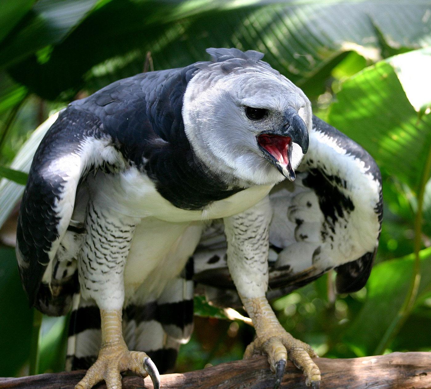 Aves en peligro de extinción – AMOR AL CONOCIMIENTO