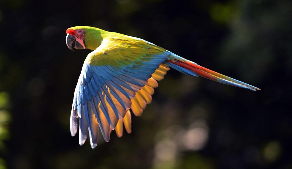 Aves En Peligro De Extinci 243 N Amor Al Conocimiento