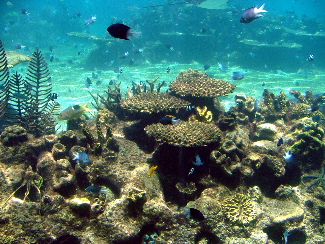 Reas protegidas por todo el mundo amor al conocimiento for Cuidado de peces