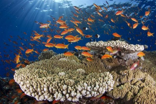 fauna-y-flora-marina-portfolio-550x366-small
