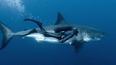 Buceando-con-tiburones-530x298