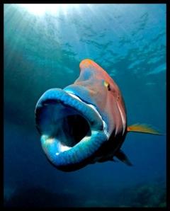 especies en peligro de extincion2