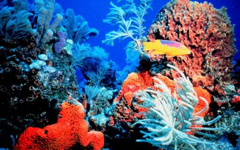 las-10-principales-especies-en-peligro-de-extincion8