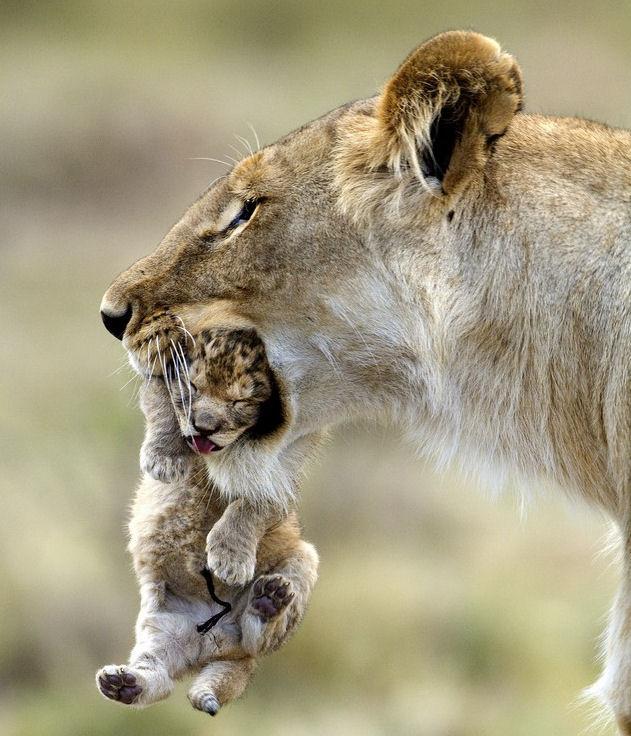 leon-cachorro