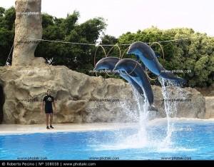 salto-de-delfines_108018