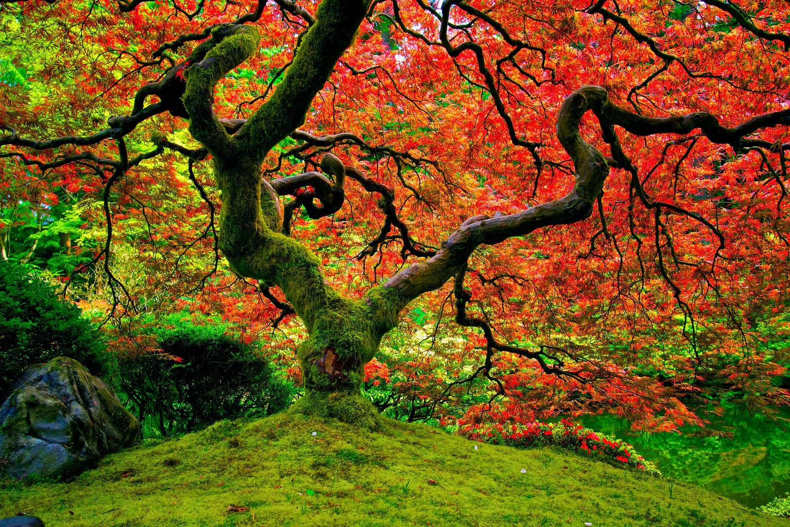 Rboles que tienen un follaje multicolor un mundo for Arboles de hoja caduca