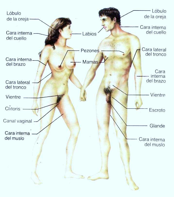 Zonas Eroticas 24