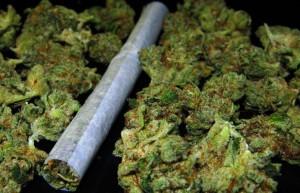 marihuana-canabis